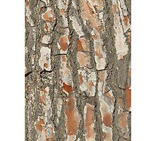 Red Tree Texture Photographic Print
