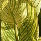 Striped Plant by Joan Wild