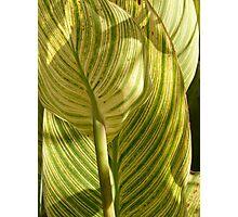 Striped Plant Photographic Print
