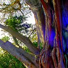 Circle tree by kiwiguy