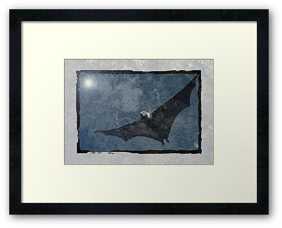 Night Flyer by Steve  Woodman