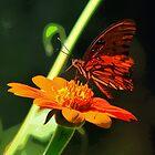 Butterfly Art by DottieDees