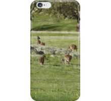 Who can see how many Roos on 'Arilka'  Mount Pleasant.  iPhone Case/Skin