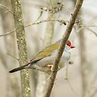 Red-browed Finch, Cleland Wildlife Park by SusanAdey