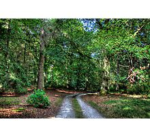 Woodland Road Photographic Print