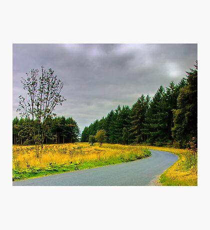 Woodland Drive Photographic Print