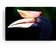 Portrait of A Horn Bill Canvas Print