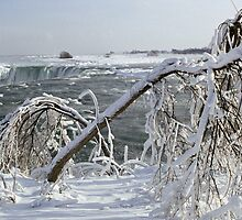 Ice Covered Limbs above the Horseshoe Falls, Niagara by DMHImages