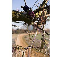 Kennet Longbarrow Wishing Tree Photographic Print