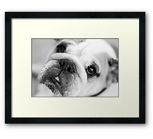 For all those puppy lovers! Framed Print