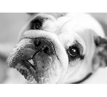 For all those puppy lovers! Photographic Print