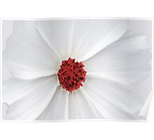 Cosmos Red Poster