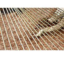 hammock rope design Photographic Print