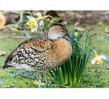 Forty winks Photographic Print