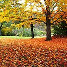 Colors of the Fall by Esperanza Gallego
