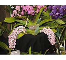 No #1 Orchids with a Bullet Photographic Print