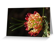 Debbies Grevillea Greeting Card