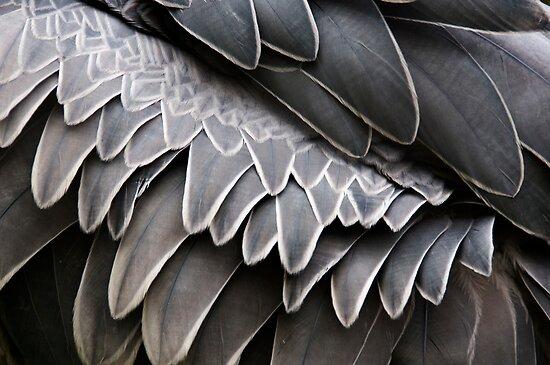 Ruffled Feathers by Skye Hohmann