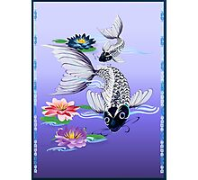 Two White Koi-Blue Lily  Photographic Print