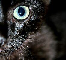 The eye of the kitten by Jess Vendette