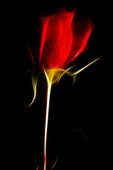 Fractal Rose by tantricpark182