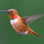 One more Humming Bird! by j Kirk Photography                      Kirk Friederich