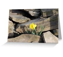 Daffodil on the Rocks Greeting Card
