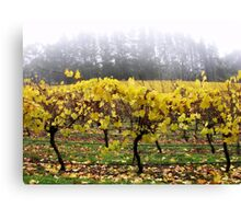 Foggy Vineyard Canvas Print