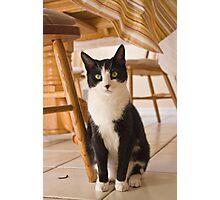 Black and White Kitten Photographic Print