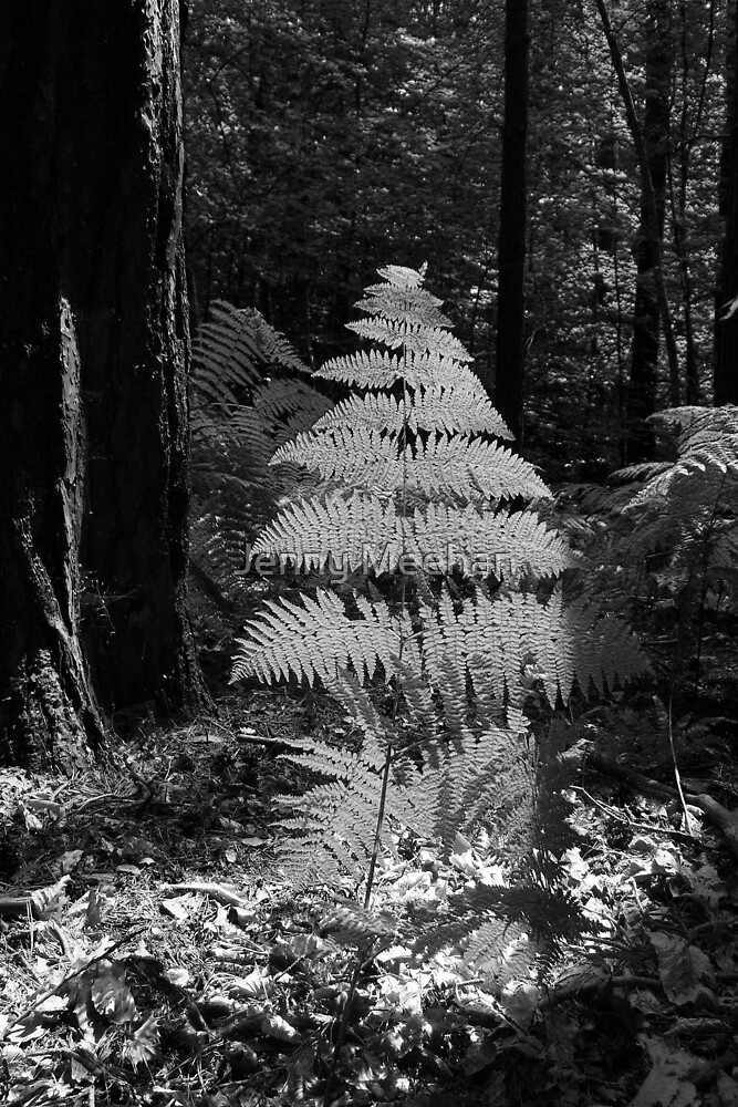 Fern in a Forest by Jenny Meehan by jenny meehan