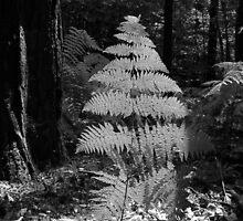 Fern in a Forest by Jenny Meehan by jenny meehan