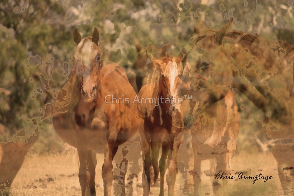 The Horses too are gone by Chris Armytage™