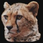 Cheetah Portrait T-Shirt by Brad Francis
