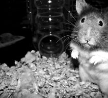 Eko the Hamster by melly07