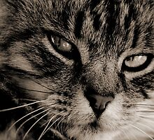LE CHAT by Leny .