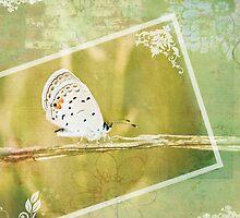 Polyommatus Icarus by Kristen Coleman