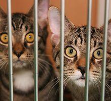 We're Innocent! by janetlee