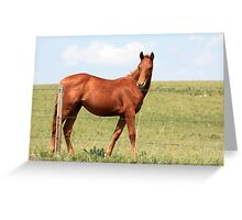 Proud Chestnut Greeting Card
