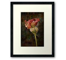 Rust n Roses ~ #13 Framed Print
