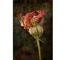 Rust n Roses ~ #13 Photographic Print
