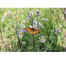 Pretty Butterfly Photographic Print