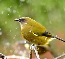 A Chilly Breeze - Bellbird NZ by AndreaEL