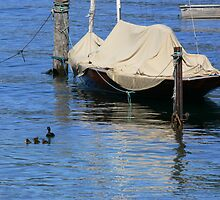 Lake Wakatipu by PhotosByG