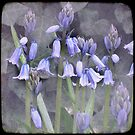 Bluebells by Marcia Luly