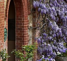 A Wisteria Welcome - Beaumont House, Adelaide by chijude