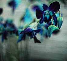 Textured Orchids by yolanda