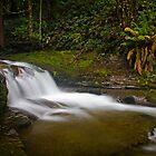 Liffey Falls, Tasmania by Rhana Griffin