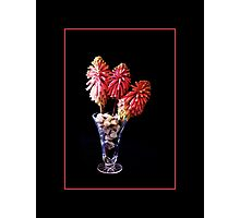 Bush Lilly. Photographic Print
