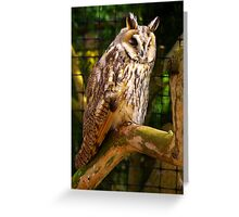 Owl #1 Greeting Card