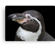 Humbolt Penguin Portrait (Cotswold) Canvas Print
